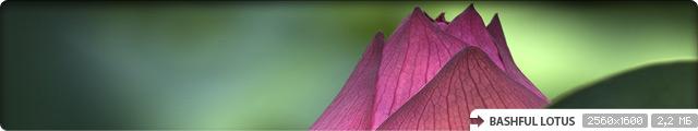 Bashful Lotus
