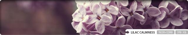 Lilac Calmness
