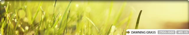Dawning Grass