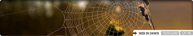 Web in Dawn