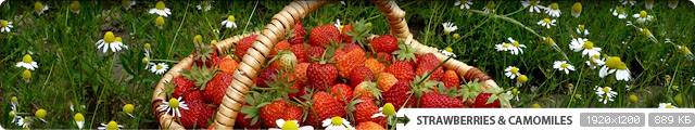 Strawberries & Camomiles