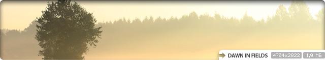 Dawn in Fields