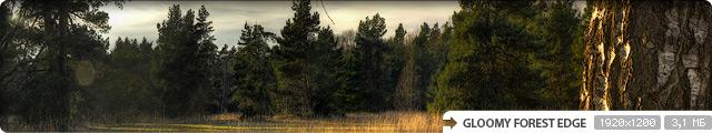 Gloomy Forest Edge