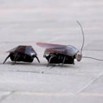 iHelicopters: Кибернетические насекомые, управляемые с помощью вашего i-девайса