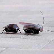 Кибернетические жук и таракан