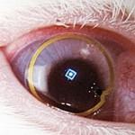 Google Lens? Альтернатива Google Glass