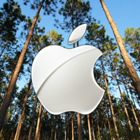 Apple_forest_0
