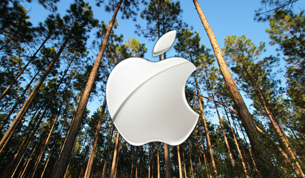 Apple_forest_1