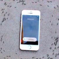 ants-icon