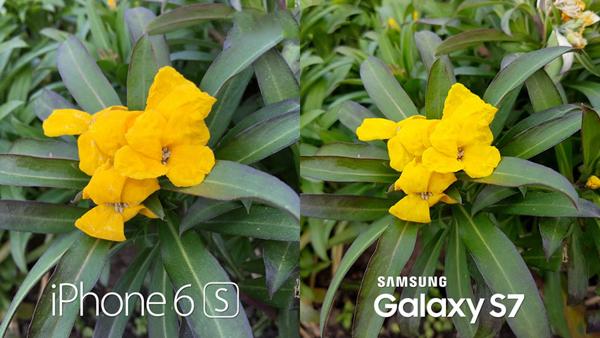 iPhone-6s-vs-Galaxy-S7-camera-2