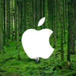 Apple создала новый фонд для защиты и восстановления лесов